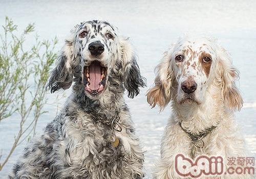 狗的基本急救常识-成犬饲养