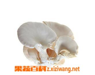 果蔬百科平菇